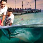Moreton Island (Australie) : à la rencontre des dauphins sauvages