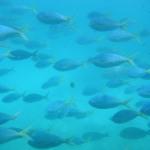 Green Island (Australie) : Carnet de voyage