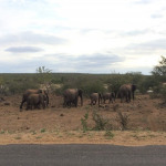 Conseils Pratiques pour bien profiter du Kruger Park (Afrique du Sud)