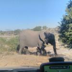 Kruger Park (Afrique du Sud) – Le meilleur des safaris