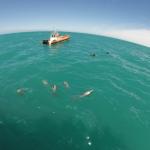 Akaroa (Nouvelle Zélande) : rencontre avec les dauphins Hector