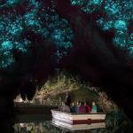 Waitomo Glowworm Caves (Nouvelle Zélande) : des milliers de vers luisants