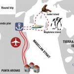 Punta Arenas (Chili) : îles des pingouins, dauphins et lions de mer