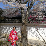 Carnet de voyage Kyoto (Japon) #1 : Sakura, Les cerisiers en fleurs