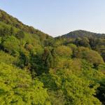 Carnet de Voyage Kyoto (Japon) #5 : Kiyomizu-dera, Hokanji, Ishibei-koji, quartier de Gion