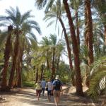 Jour 6 en Egypte : Carrières du Djebel Silsileh, Marche dans les Palmeraies