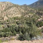 Roadtrip : d'Essaouira à Agadir : Vallée du Paradis, Plages de Surf, la Route du Miel & montagnes