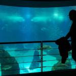 Lisbonne (Portugal) #4 : Oceanário – Aquarium de Lisbonne