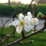 Notre séjour en Haute-Normandie (France) : visite de Rouen, Etretat et Veules-les-Roses – partie 2/2