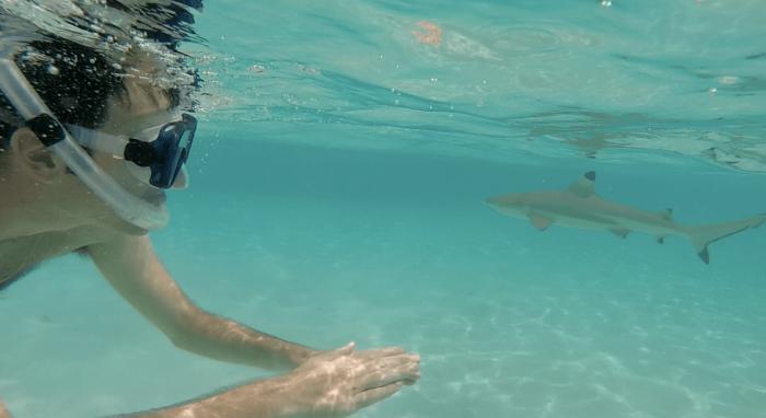 moorea-requins-raies4