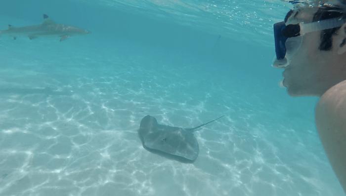 moorea-requins-raies5